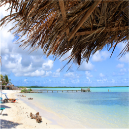 CAI   Tucked away in Bonaire's mangroves, this somewhat secluded beach offers a...  More