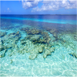 TE AMO   This large white sandy beach offers not only impressive sights of arriving and...  More