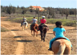 HORSEBACK RIDING   Whether you're looking for lessons or an alternative way of exploring the island, you will find horseback riding facilities at the Rancho Washikemba (eastern side) and at the Horse Ranch Bonaire (western side), providing lessons and tours for riders of all levels.