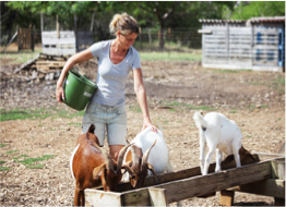 ALETTA'S GOAT FARM   With her products available in most supermarkets and restaurants, chances are that you will come across Aletta's products during your stay on Bonaire - lookout for Aletta's Semper Kontentu Goat Cheese! Here you can take a tour of the farm, pet the goats and learn about the cheese, yoghurt, and milk making process of this 100% Bonairean product.