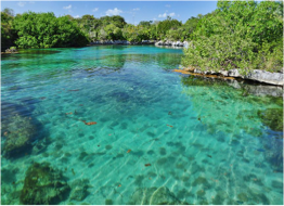 NATURE RESERVES   For a chance to spot and observe local wildlife species in their natural habitat, such as monkeys, flamingos, crocodiles, marine turtles, or even whale sharks, head to one of the abundant reserves located just outside Cancun.