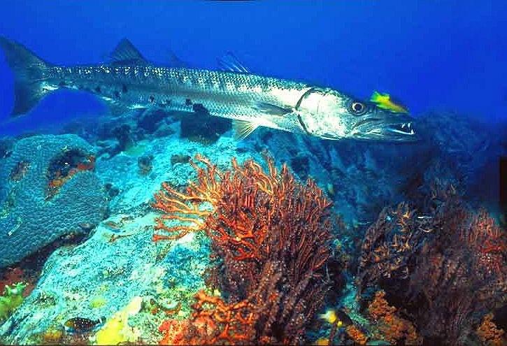 culebra-diving.jpg