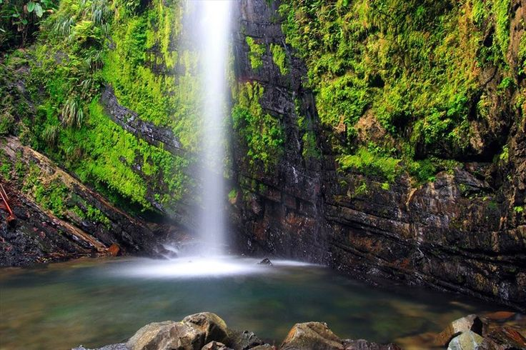 El Yunque National Rainforest.jpg
