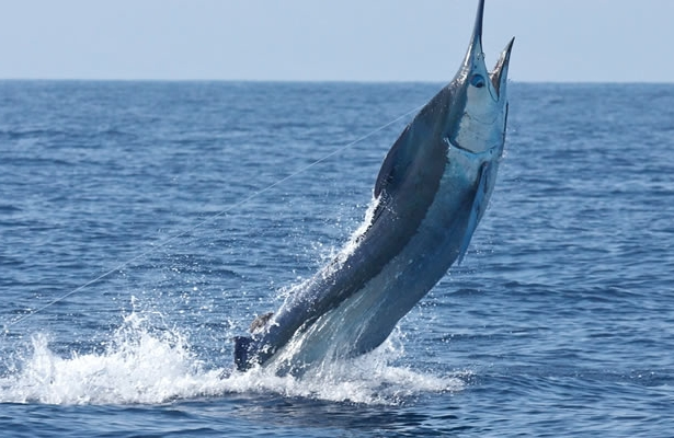 fishing-puerto-rico.jpg