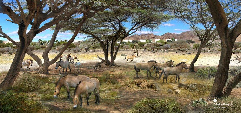 AWPR_Asian Desert Safari(2).jpeg