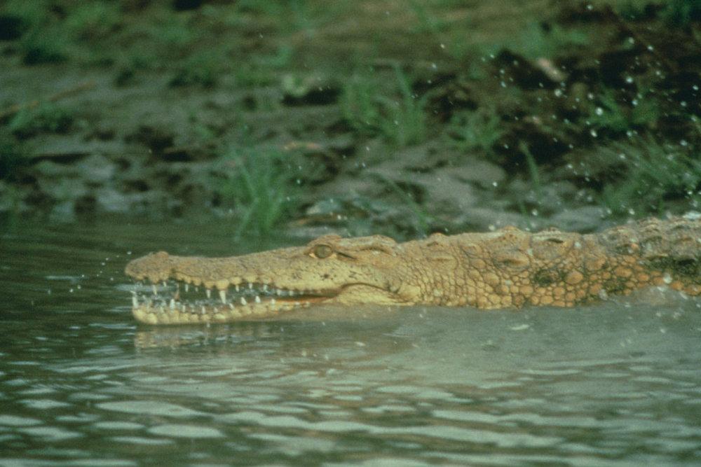 GEN_073_crocs DAK.jpg