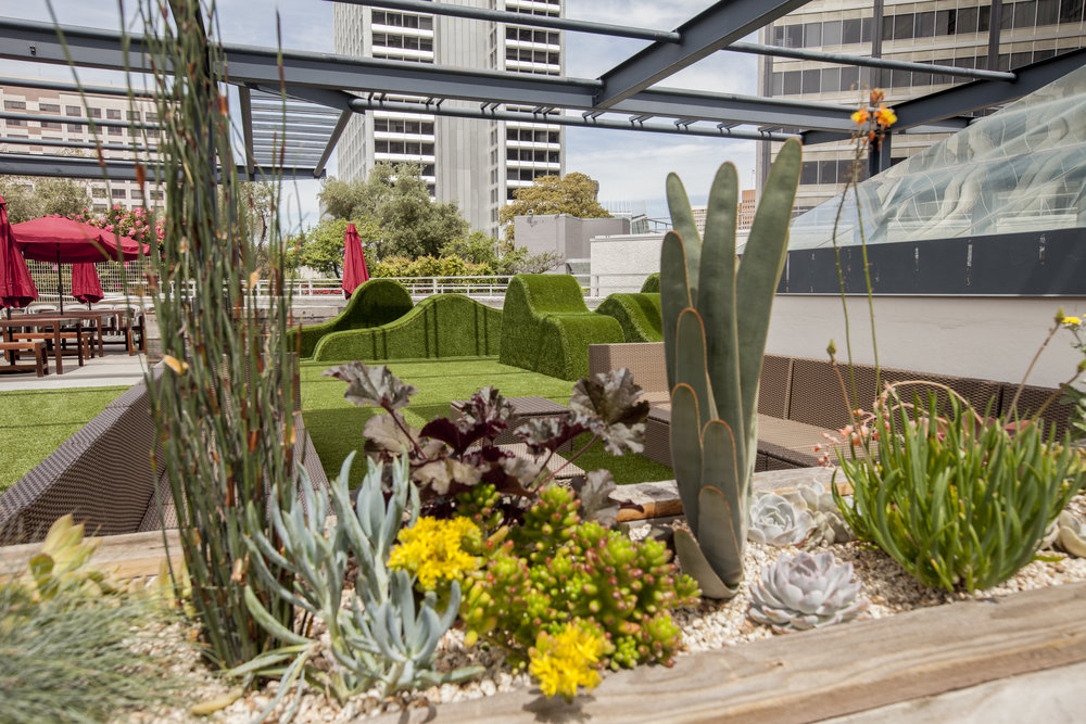 Planter boxes were added to this once concrete landscape of the roof deck.