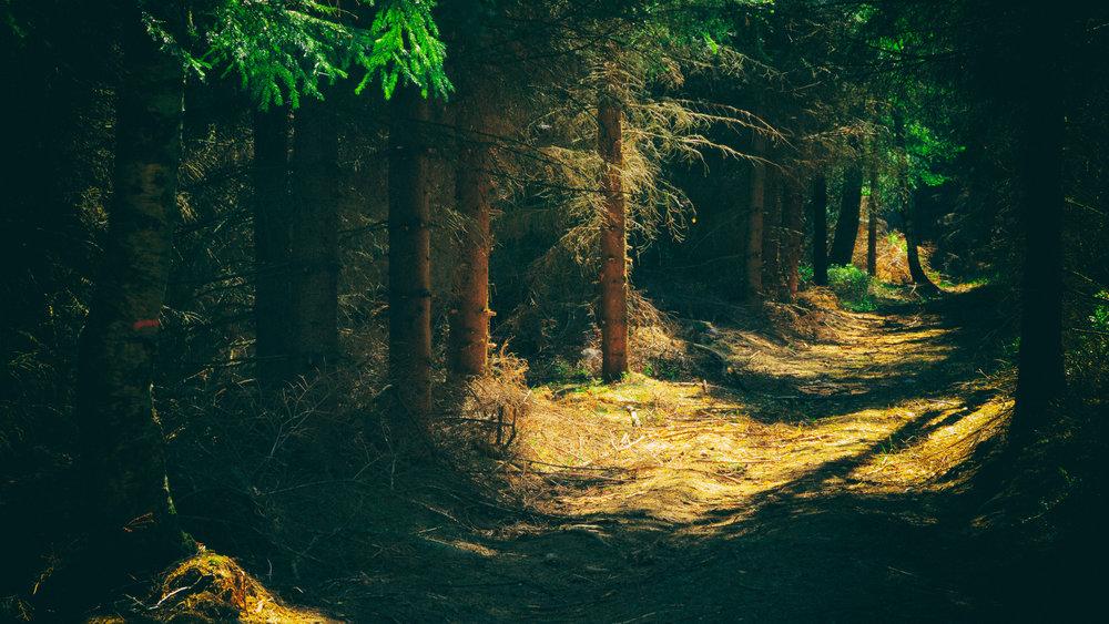 forestbackground