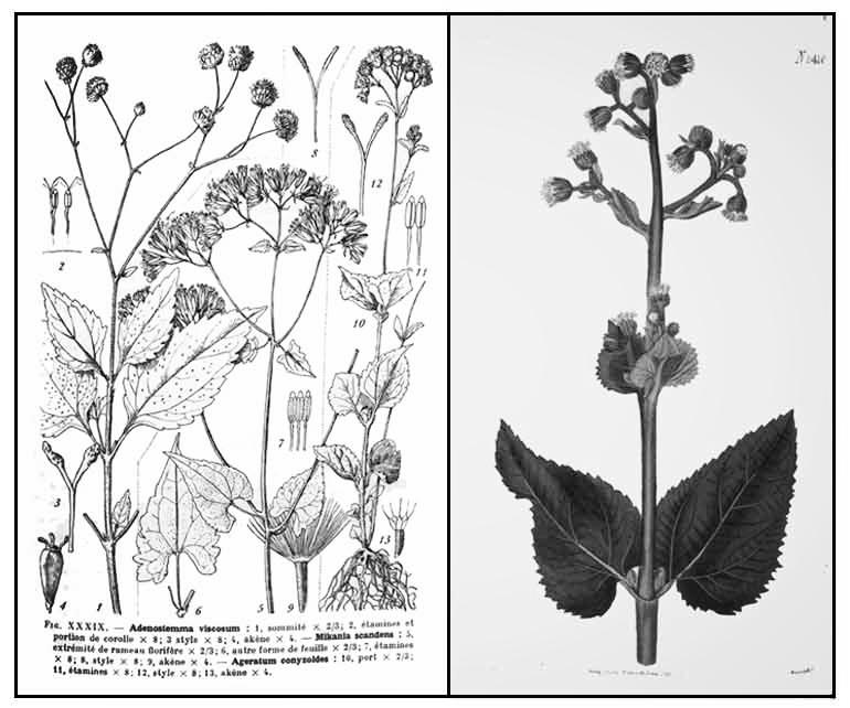 mamajuana herbs 2.jpg