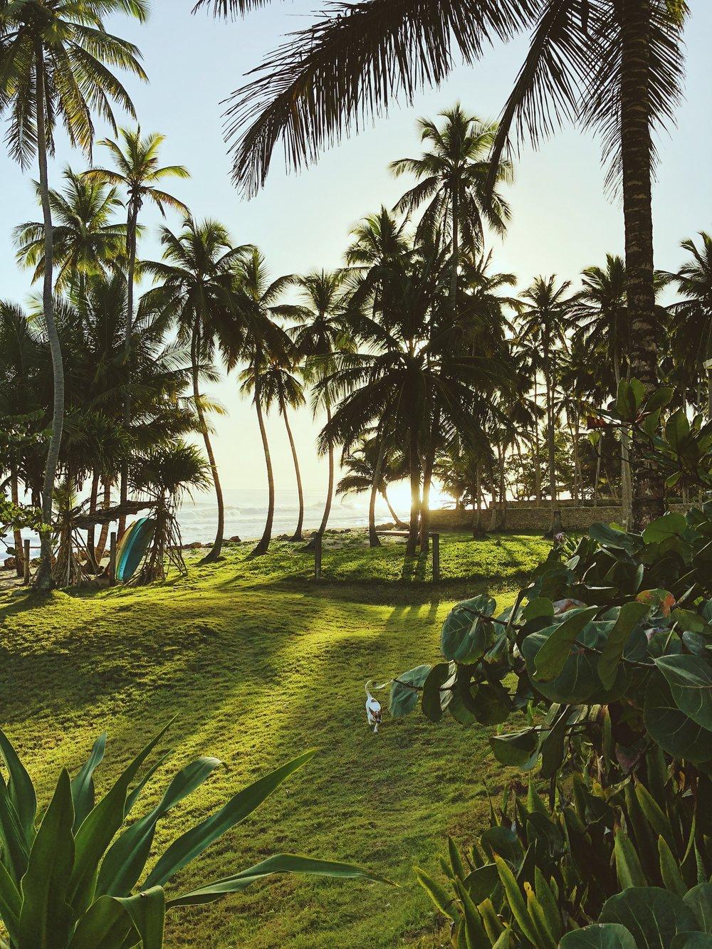 punta cana sunrise beach.JPG