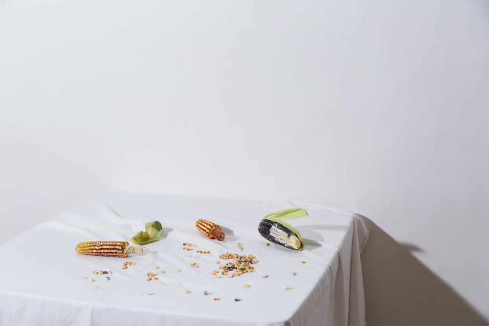 maiz-extincion
