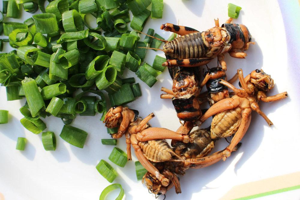 comer-insectos-grillos