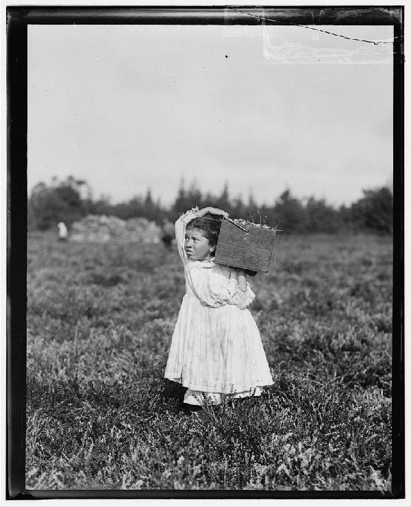 Jennie Camillo, 8 años de edad, vive en West Maniyunk (cerca de Filadelfia). Este verano ha recolectado arándanos en Turkeytown, cerca de Pemberton, Nueva Jersey. Esta es la cuarta semana de clases en Filadelfia, pero Jennie se quedará aquí dos semanas más. Pemberton, NJ, septiembre 27, 1910.