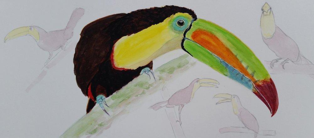 Honduras Sketching -
