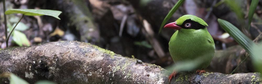 Borneo -