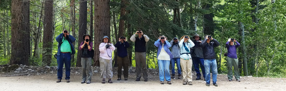Birding Lee Vining Canyon, California's eastern Sierra Nevada. Join me for my annual June programs at Mono Lake!
