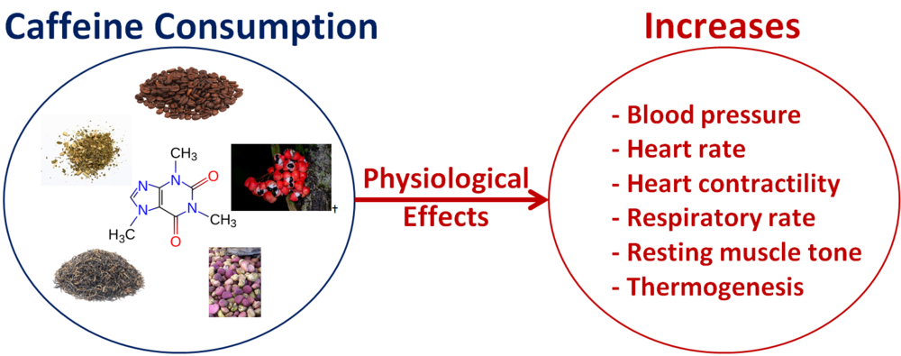 Physiological Effects of Caffeine BETTER RTP.png