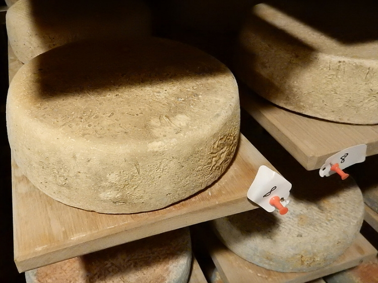 Seven Sisters, a traditional Alpine goat's milk cheese. Credit: Provided