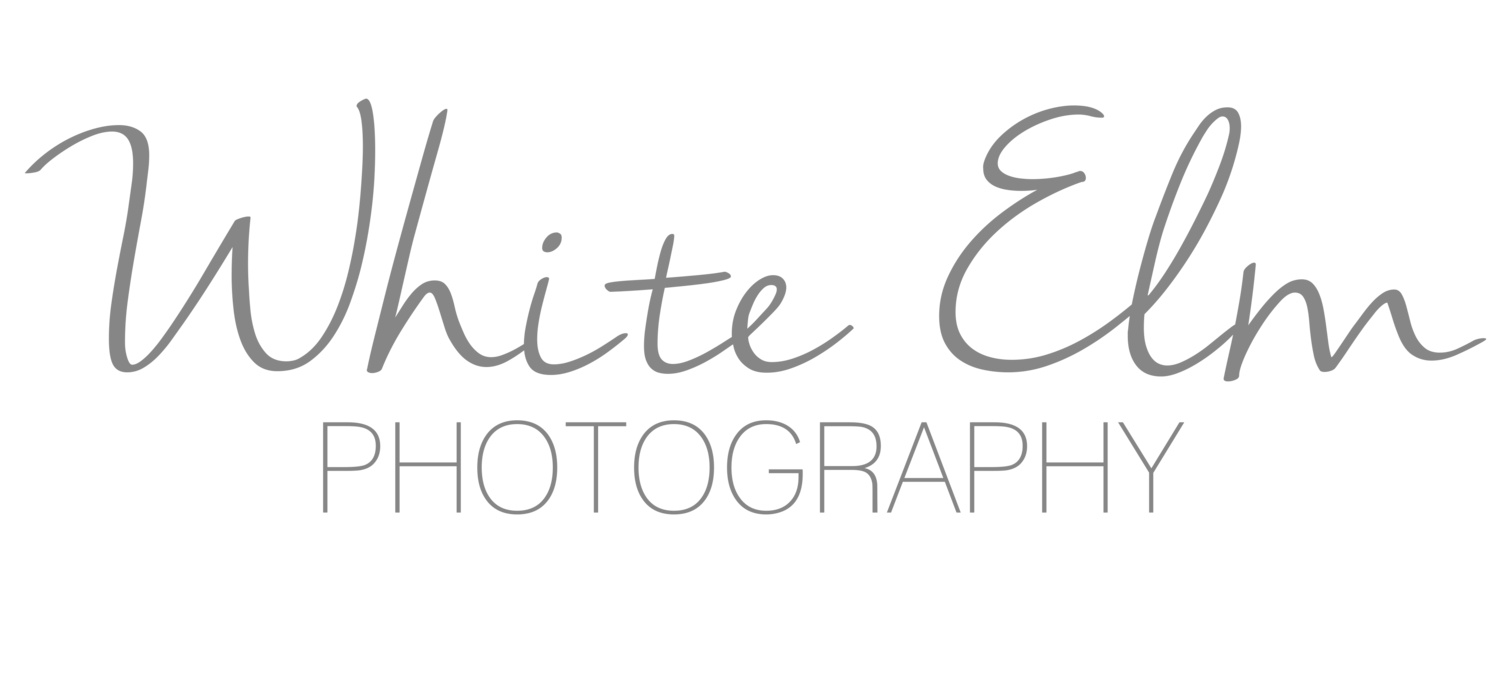 White Elm Photography