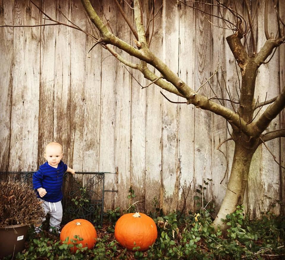 garden shed pumpkins.jpg
