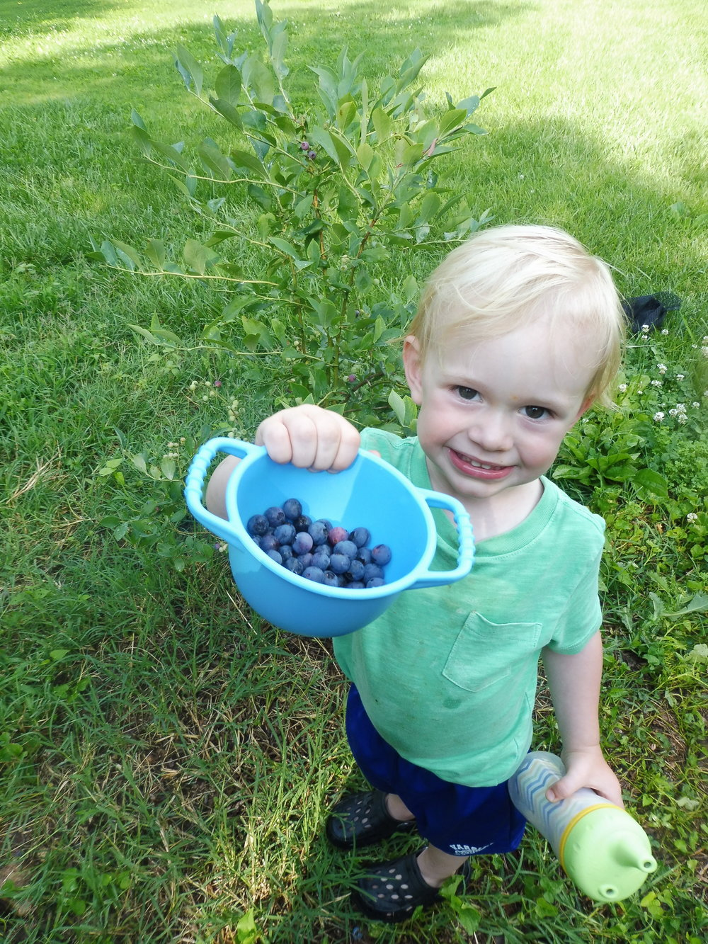 Rock at the farm picking our summer crop of blueberries.