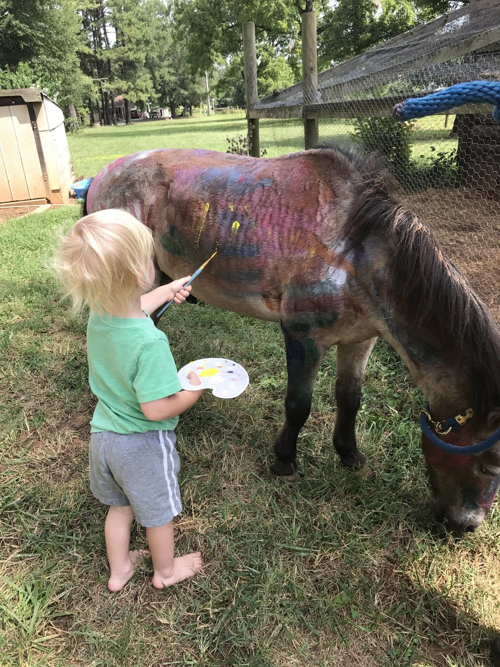 Rock painting a horse.JPG