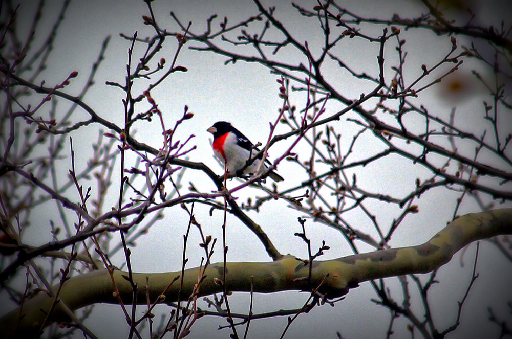 bird walk.jpg