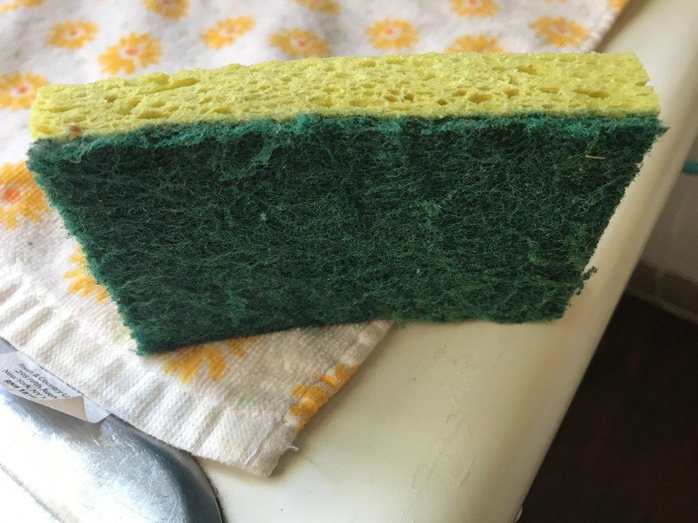 the sponge.JPG