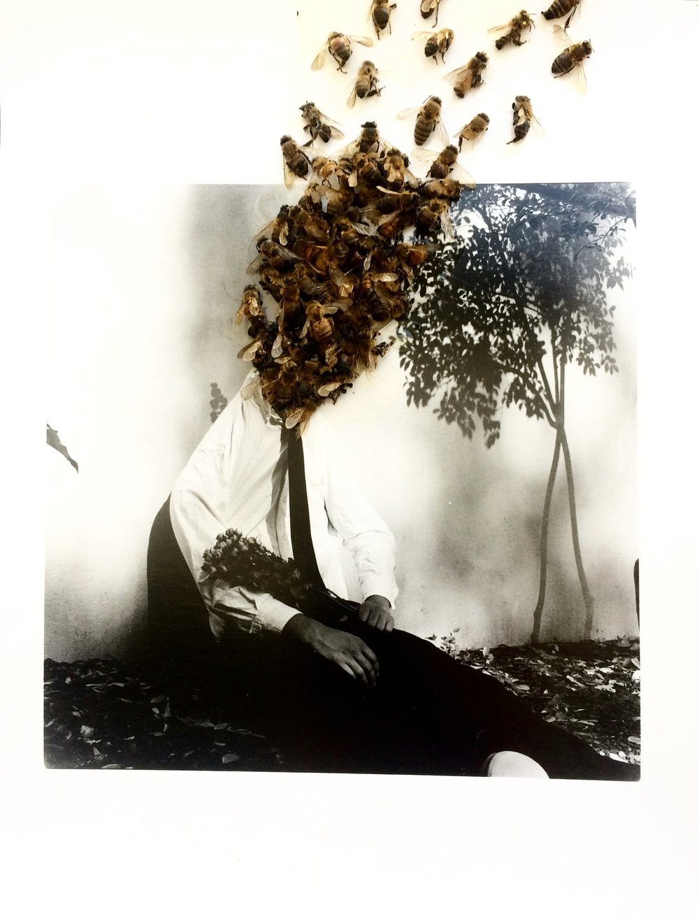 Collaboration with photographer Bow Smith  Mixed Media, dead honeybees on a silver gelatin photograph