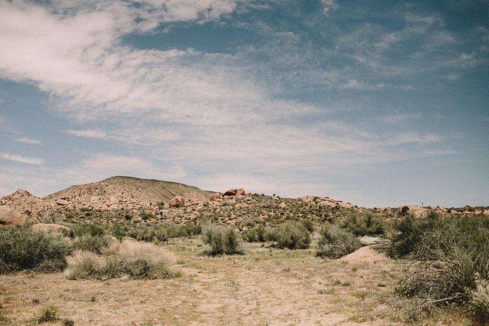 Joshua Tree desert landscape