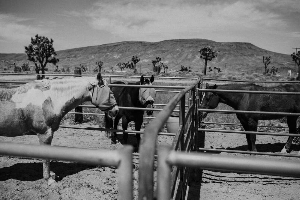 horses in pioneertown