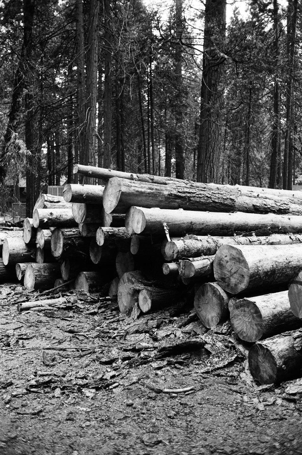 deforestation in yosemite