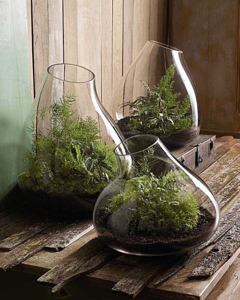 HA-Roost terrarium.jpg