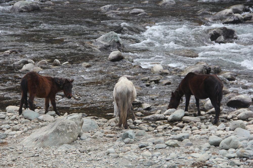 Horses at the glacial river