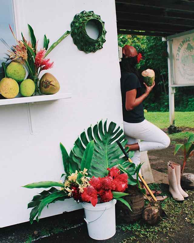She wears white pants just to get them dirty. 🌺🌿 My papaʻs fruit stand @uncleharrymitchell  First fruit stand opened on Road to Hāna, est. 1975  #localgirlworld #FruitStand #Lifestyle #Kuleana #Coconuts #WaiNiu