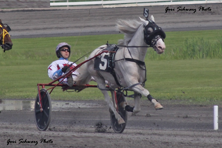 A standardbred pacer racing in a traditional harness race.  A trotter would be equipped similarly with changes to accommodate their different gait. - Geri Schwarz photo.
