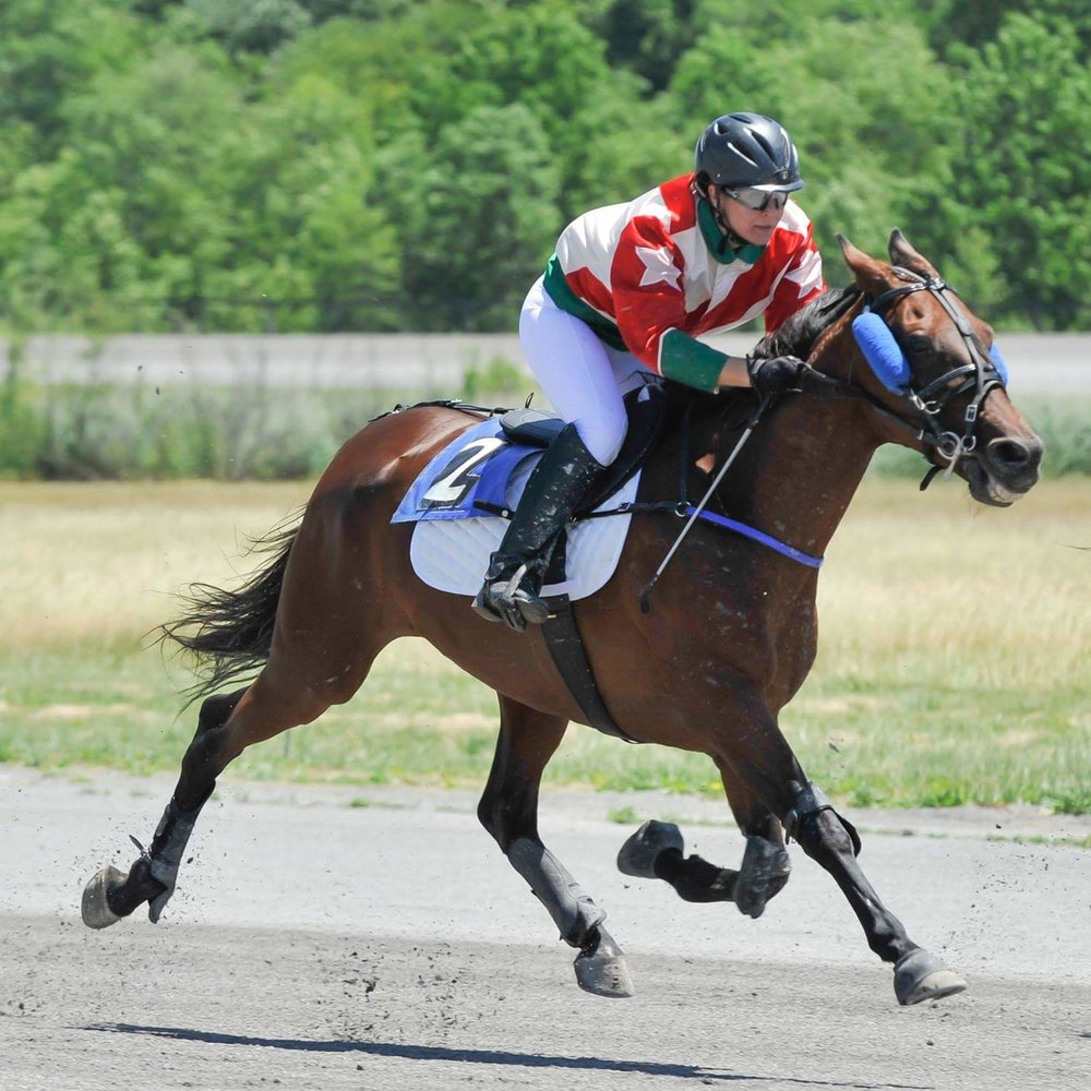 A standardbred trotter racing under saddle.  While the rider looks similar to a jockey, there are differences in how they ride.