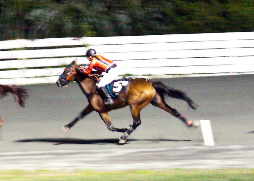 Rosecroft Raceway  Photo by Clarissa Coughlin