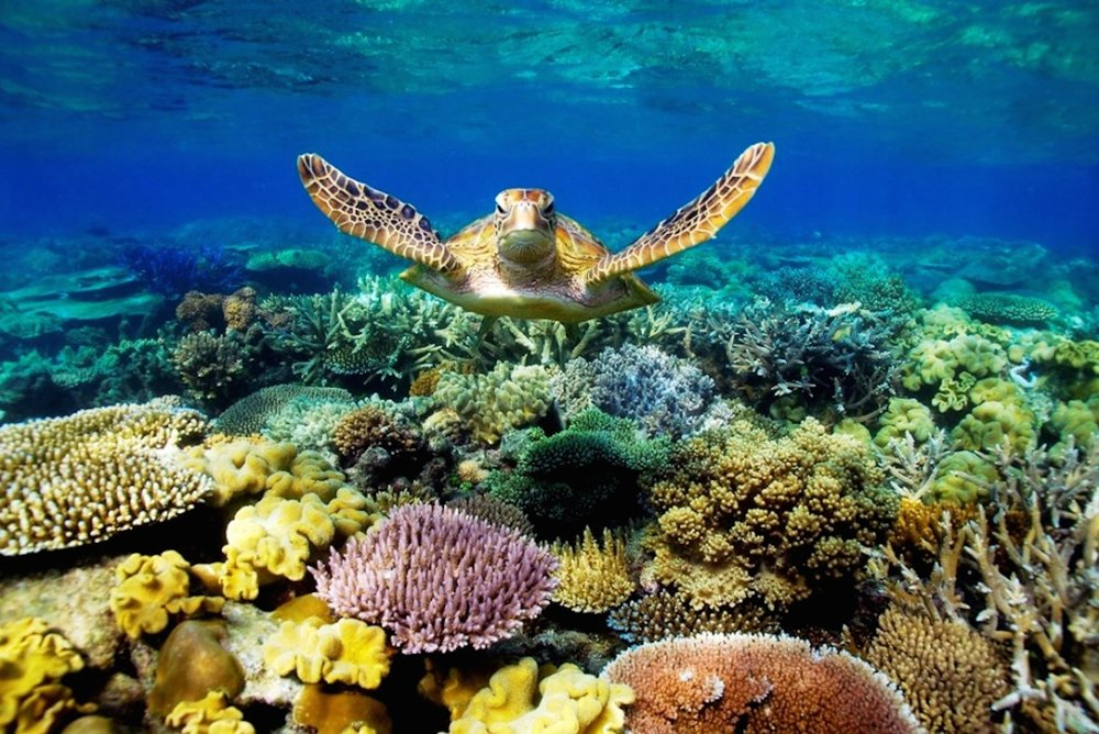 Great-Barrier-Reef-Turtle-Wallpaper.jpg