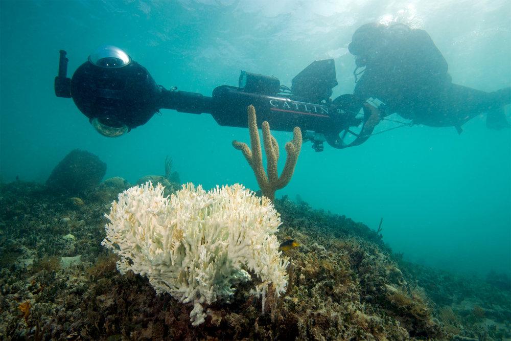 Coral-bleaching-6-1120x747.jpg
