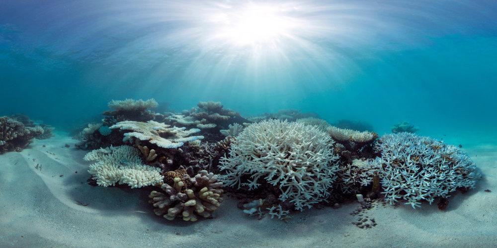 002-Maldives-Panorama-Image2a-1120x560.jpg