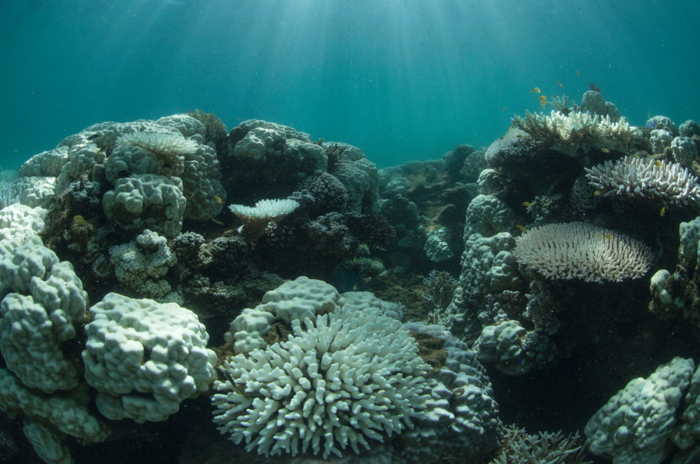 30-The-Coral-Bleaching-In-New-Caledonia-1120x741.jpg