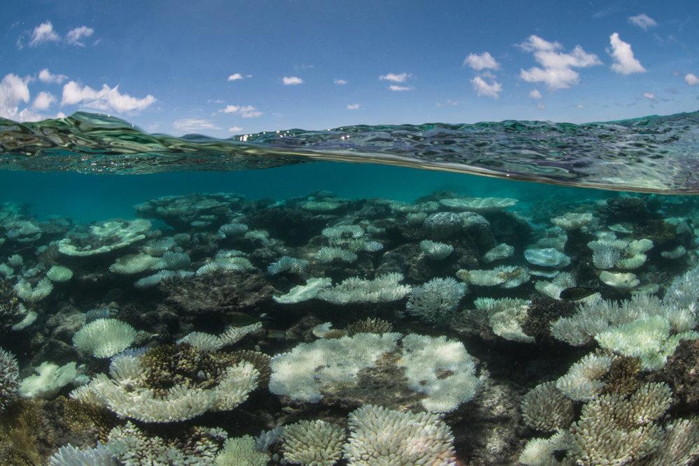 004-Coral-Bleaching-in-the-Maldives-1120x747.jpg