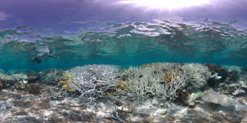 005-Coral-Beaching-in-the-Maldives-Panorama-4-1120x560.jpg