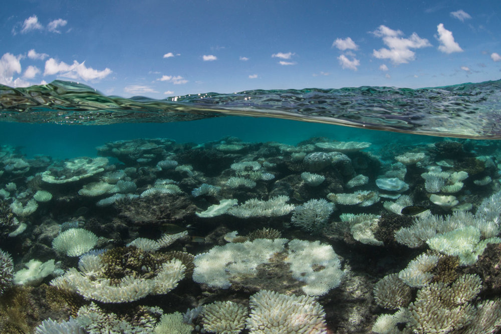 004-Coral-Bleaching-in-the-Maldives-1120x747.jpg