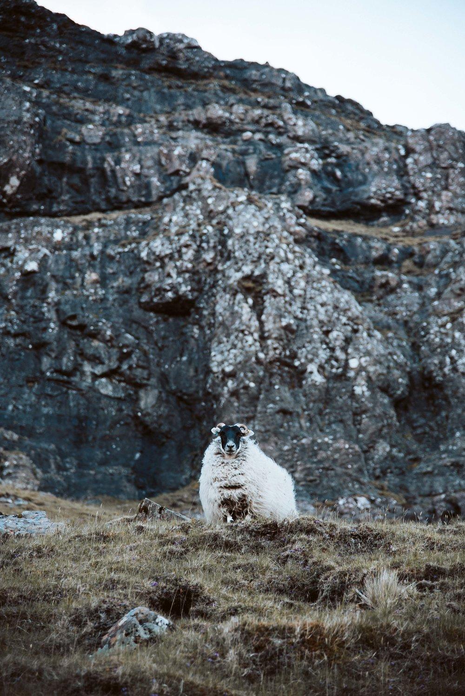 ©monsorno_Scotland2018-10974.jpg