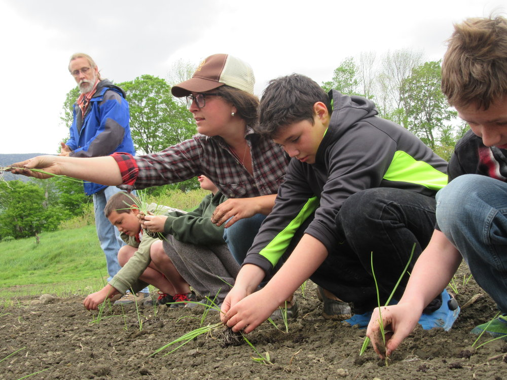 onion seedlings and currier students .JPG
