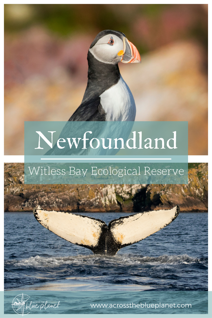 Across the Blue Planet - Witless Bay Ecological Reserve