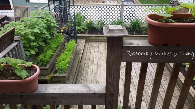 Summer 2016 garden