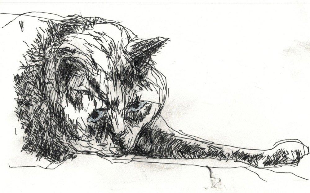 Cat 1.jpg